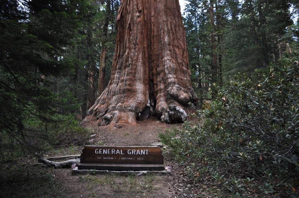 Drie na grootst bekende boom van de wereld.