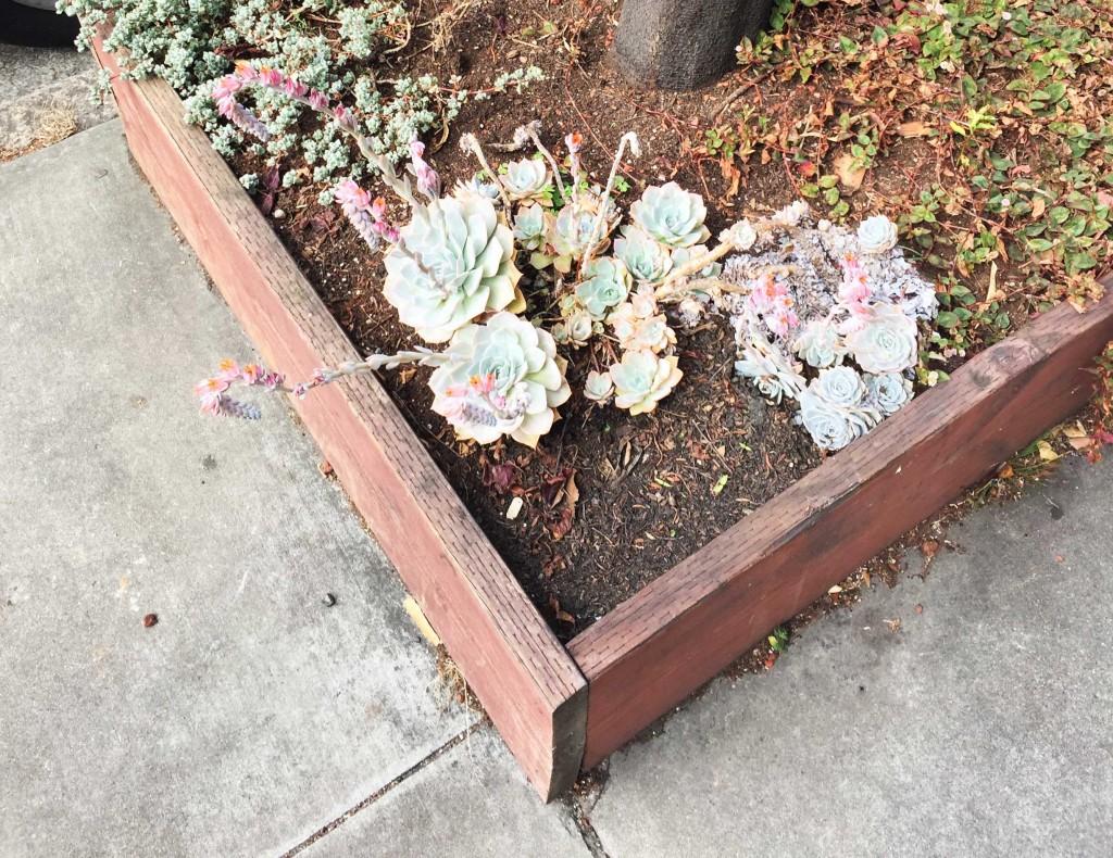 Aparte mooie plantjes langs de kant